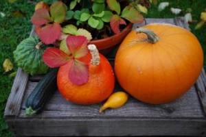 Höstens vackra skörd!